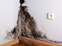Ozone and Mold: What Is the Latest on the Use of Ozone to Decontaminate Moldy Buildings?